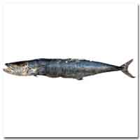 Mackerel (Kingfish)