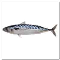 Mackerel (Canadian)