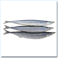 Mackerel Pike