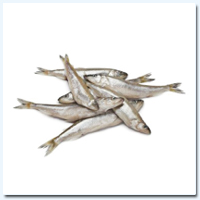Smelt Fish (Whole) IQF