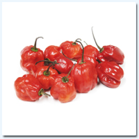 Jamaican Pepper (Red)