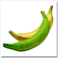 Plantain (Green & Yellow)